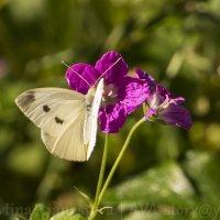 Бабочка :: AVA Тина