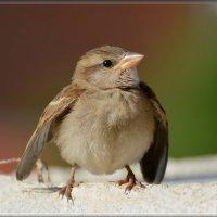 молодец-удалец) :: linnud