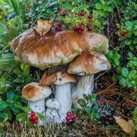 Семейка белых грибов... :: Федор Кованский