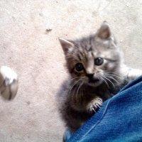 кот детства :: Дамир Мутиев