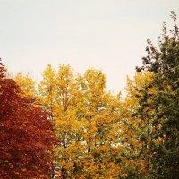 Краски осени... :: Дарья Яковлева