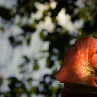 цветик :: Nikkkos Kas