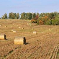 Сбор урожая.Осень. :: Андрей Куприянов