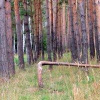 Лесной шлагбаум . :: Мила Бовкун