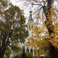 Осенний дождь :: Ольга