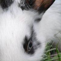пасхальный кролик :: Ксения Волкова