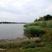 Берег реки Дон... :: Тамара (st.tamara)