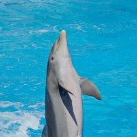 Дельфин :: Игорь Шулья