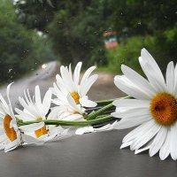 Цветы любви и предсказаний... :: Галина