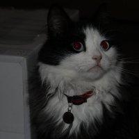 Кошка :: Олег88 Куб