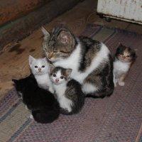 Семейка :: Наталья Гусева