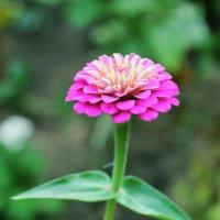 цветочек :: Юлия Яровенко