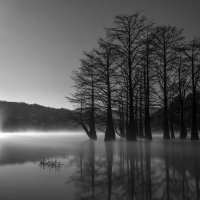 Болотные кипарисы на озере Сукко :: Алексей Яковлев