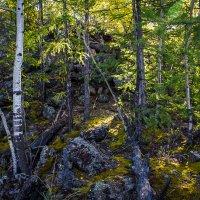 В лесу :: Mikhail