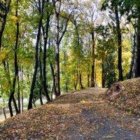 Осень, осень... :: Анатолий ❉