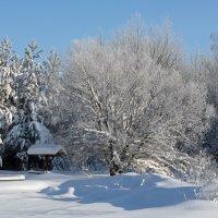 Зима :: Валентина Манюгина