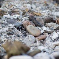 На утро меж камней зола :: Микто (Mikto) Михаил Носков