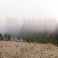 В тумане. :: Александр Потапов