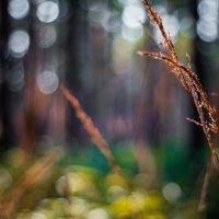 прогулка с полтинником :: Андрей Афонасьев