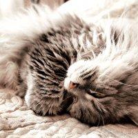 Lazy Monday :: Ольга Жукова