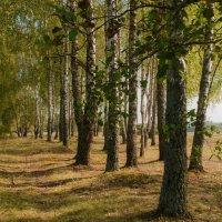 Витебская область, Беларусь :: Злата Красовская