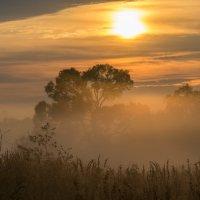 Золотой туман :: Олег Козлов