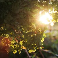 Солнце :: Татьяна Павелко
