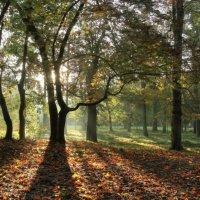 Осенний парк :: Павел Дунюшкин