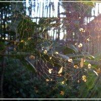 Паутина в лучах заходящего июльского солнца :: Евгений Беговатов