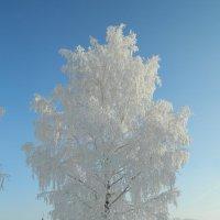 Зимняя березка :: Анастасия Байрамалова