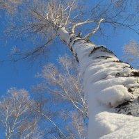 Зимнее небо :: Анастасия Кононова