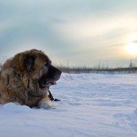 зимнее солнце :: Наталия Кузнецова