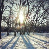 зима... :: Юлия Тригуб