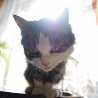 ...котэшка моя :: Наталья Бох