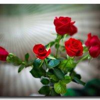 розы :: Оксана Богачева
