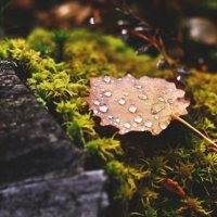 After the Rain :: cheshirsky x