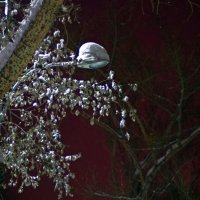 ночь...зима2 :: Дмитрий Ломтев