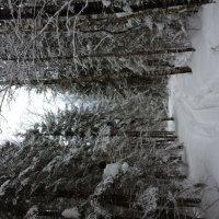 Зимний лес.Дорога после меня. :: Натали Каменская