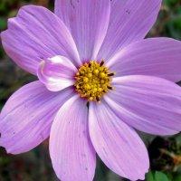 Цветок :: Алёна Шкобенева