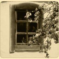 Садок вишневий коло хати. :: Marina Kutsenko
