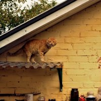 Под крышей дома своего. :: Marina Kutsenko