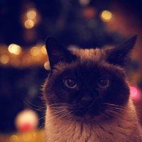 Christmas Cat :: Виталий Григорьев