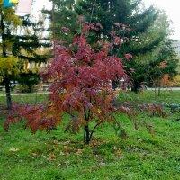 Красная осень :: Марина Филатова