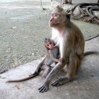 Мать и дитя. :: Ольга Меньшикова