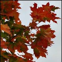 Осенние листья :: DR photopehota