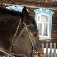 Портрет грустной лошади :: Сергей Комков