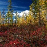 Георгий Головин - Осень на болоте