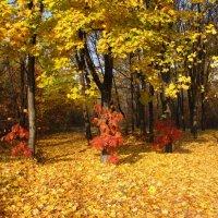 Игорь Микулёнок - В багрец и золото одетые леса :: Фотоконкурс Epson