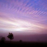 Вероника Миронова - Туманное утро