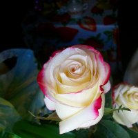 роза :: Александр Першин